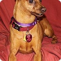 Adopt A Pet :: Sam - Summerville, SC