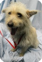 Terrier (Unknown Type, Small) Mix Dog for adoption in Baton Rouge, Louisiana - Wilson