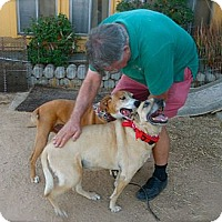 Adopt A Pet :: Lefty & Annie-VIDEO - Los Angeles, CA