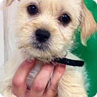 Adopt A Pet :: Nicholas - Green Bay, WI