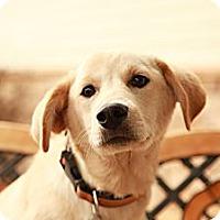 Adopt A Pet :: Zeke - Lancaster, OH
