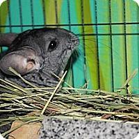 Adopt A Pet :: Jamie - Titusville, FL