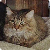 Adopt A Pet :: Stuffin - Byron Center, MI