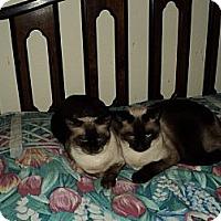 Adopt A Pet :: AJ - Clermont, FL