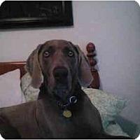 Adopt A Pet :: Roxy - Eustis, FL