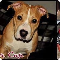 Adopt A Pet :: Ryder Cup - Sylvania, OH