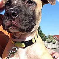 Adopt A Pet :: Riley - Oak Creek, WI