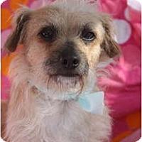 Adopt A Pet :: Wilbur - san diego, CA