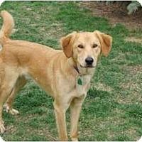 Adopt A Pet :: Festus - Denver, CO