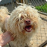 Adopt A Pet :: Lizzy - Lorain, OH