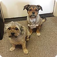 Adopt A Pet :: Porter & Jackson - dewey, AZ