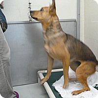 Adopt A Pet :: Daisy - foster/adopt - San Francisco, CA