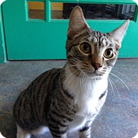 Adopt A Pet :: Daffie - Topeka, KS