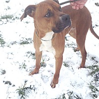 Adopt A Pet :: #211-14 RESCUED! - Zanesville, OH