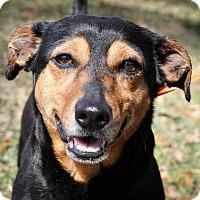 Adopt A Pet :: Cue - Gainesville, FL