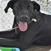 Adopt A Pet :: Mikey - Athens, GA