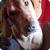Adopt A Pet :: Joy - Salt Lake City, UT