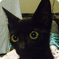 Adopt A Pet :: Batman - Whittier, CA