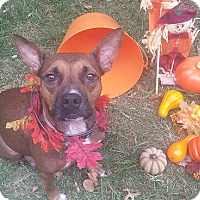 Adopt A Pet :: Kora - Staunton, VA