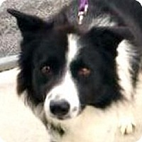 """Adopt A Pet :: DeeJay""""I've Been ASOPTED"""" - Minerva, OH"""