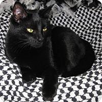 Adopt A Pet :: Aimy - Verdun, QC