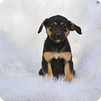 Adopt A Pet :: Stoner - Charlemont, MA