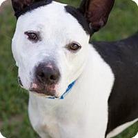 Adopt A Pet :: Jake - New Orleans, LA