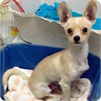 Adopt A Pet :: Mikey - Phoenix, AZ