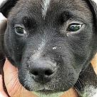 Adopt A Pet :: Butler