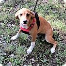 Adopt A Pet :: Judy Destin