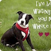 Adopt A Pet :: Jasmine - La Crosse, WI