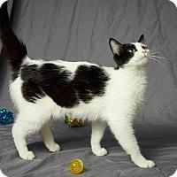 Adopt A Pet :: Myra - Tulsa, OK