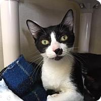 Adopt A Pet :: Leta - Fort Collins, CO