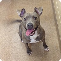Adopt A Pet :: 1-9 - Triadelphia, WV