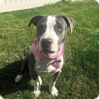 Adopt A Pet :: Pharah - Boise, ID