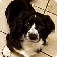 Adopt A Pet :: Max 2 - Tampa, FL