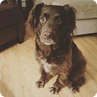 Adopt A Pet :: Alfie~meet me! - Glastonbury, CT