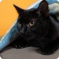 Adopt A Pet :: Angelina - Seattle, WA