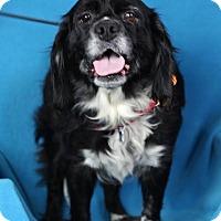 Adopt A Pet :: Tessa - Minneapolis, MN