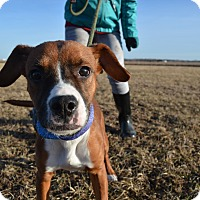 Adopt A Pet :: Ellie - Grinnell, IA