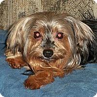 Adopt A Pet :: Amore - Lorain, OH