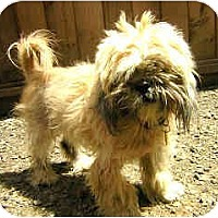 Adopt A Pet :: Joe Schmo - Portland, OR