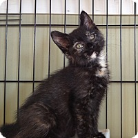 Adopt A Pet :: Sugar - Island Park, NY