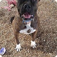 Adopt A Pet :: Ali - Foristell, MO