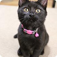 Adopt A Pet :: Charlotte - Greensboro, GA