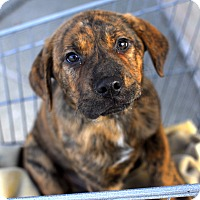 Adopt A Pet :: Mack-Adopted! - Detroit, MI