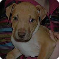 Adopt A Pet :: Butterscotch - Buffalo, WY