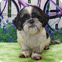Adopt A Pet :: Dino Davis - Urbana, OH