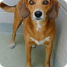 Adopt A Pet :: Miss Kay