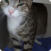 Adopt A Pet :: Jayden - Hamburg, NY